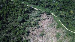 A terra sem lei no Pará: Da promessa de progresso com Belo Monte ao recorde de