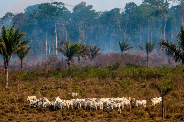 Como sua alimentação no dia a dia contribui com o desmatamento da