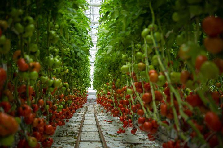 Les fermes Lufa ont des installations à Ahuntsic, Anjou et Laval (photo).