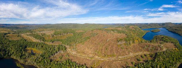 An area of boreal forest in Canada that's been clear