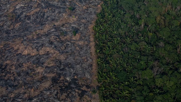 A section of the Amazon rainforest is shown after being decimated by wildfires on Sunday in the Candeias do Jamari region near Porto Velho, Brazil. According to Brazil's National Institute of Space Research, the number of fires detected by satellite in the Amazon region this month is the highest since 2010.