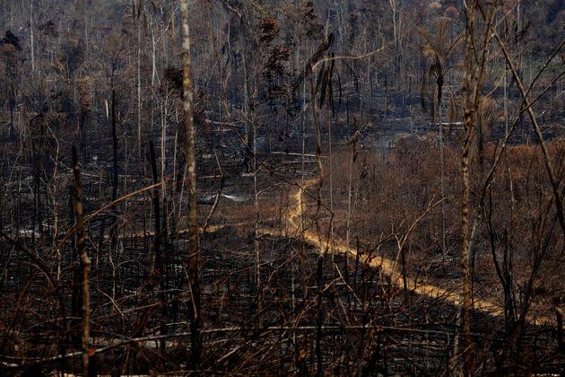Árvores destruídas pelo fogo na Floresta Nacional Jacunda, perto de Porto Velho, em Rondônia,...