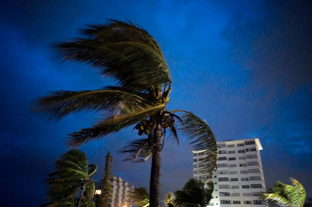 Strong winds move the palms of the palm trees at the first moment of the arrival of Hurricane Dorian...