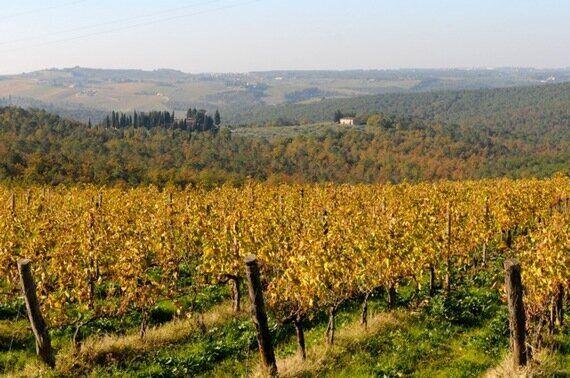 イタリアの隠れた秋。収穫後のぶどう畑の紅葉が美しいって知っていましたか?