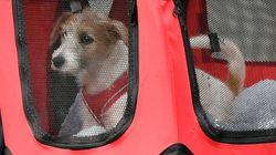 Το σκυλάκι του Μπόρις Τζόνσον έφτασε στην Ντάουνινγκ Στριτ - και ο Λάρι