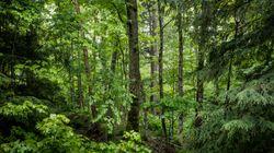 Η Ιρλανδία θα φυτέψει 440 εκατ. δένδρα έως το 2040 για την καταπολέμηση της κλιματικής