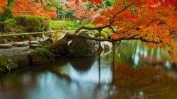 都会の小さな秋を見つけに。東京の隠れた紅葉狩りスポット3選
