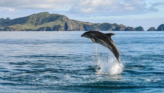 Vietato nuotare con i delfini in Nuova Zelanda: