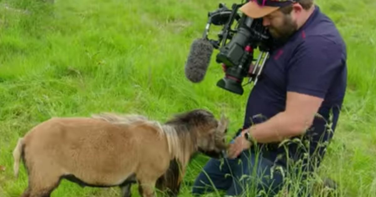 BBC Journalist Learns That Lesson About Never Working With Animals
