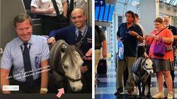 La passeggera porta il pony in aereo tra lo stupore dei viaggiatori. Ma è per una buona
