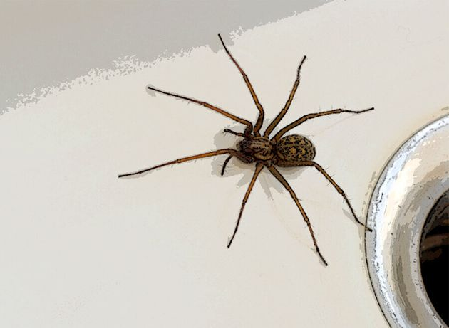 How To Get Rid Of Spiders (Because Theyre Infiltrating Our Homes Right Now)