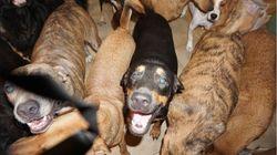 Γυναίκα στις Μπαχάμες υιοθέτησε 97 σκυλιά στη διάρκεια του