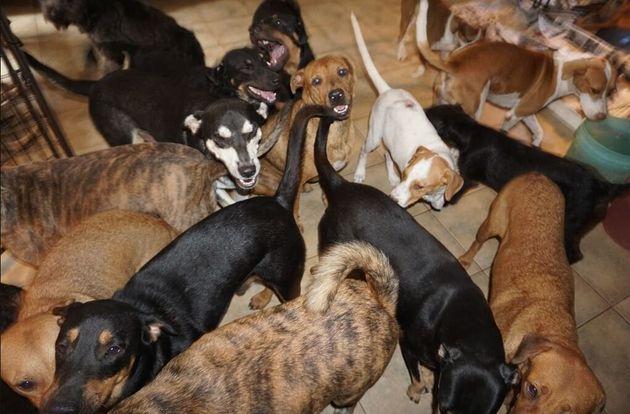 97 σκυλιά στο δωμάτιο της Σέλλα