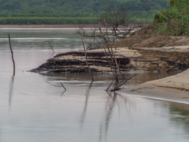 Bank of the Amazon river during the low water season. Amazonia. Jungle on the border of Brazil and Peru....