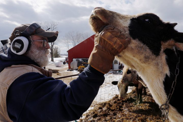 Dairy farmer Fred Stone checks on his cows in March after discovering the soil, hay and milk from the cows on the farm in Aru