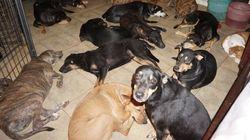Salva 97 cani dalla furia dell'uragano Dorian e li ospita a casa sua.