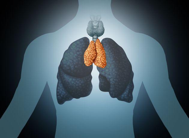 色のついた部位が胸腺。リンパ球の分化・増殖に関与し、免疫機能に携わる器官。幼少時に発達するが思春期以降は退縮し、脂肪に変わる。