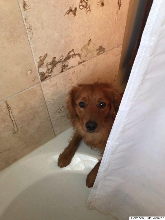 주인이 목욕을 싫어한다고 생각한 개는 언제나 장난감을