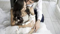 고양이와 함께 웨딩 사진을 찍으면 이런