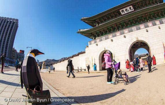 펭귄들의 행진, 서울서