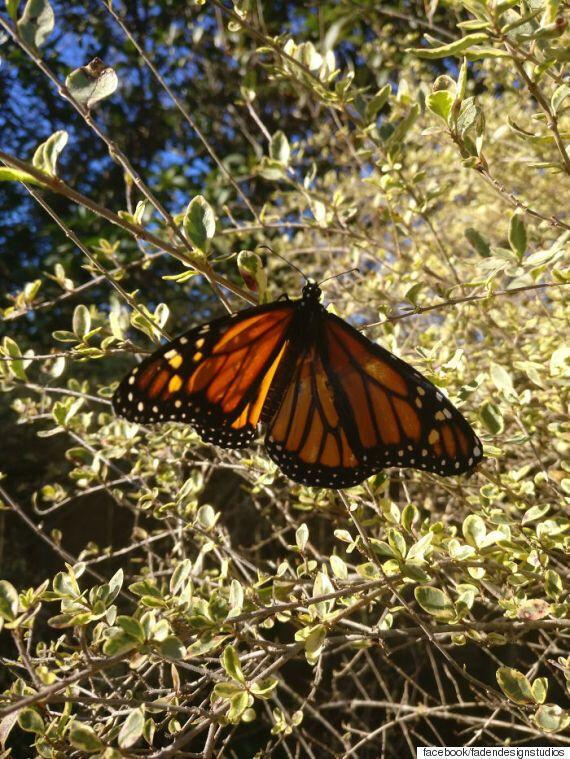 날개가 찢어진 나비에게 직접 날개이식 수술을