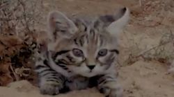 세상에서 가장 치명적으로 위험한 고양이는 너무