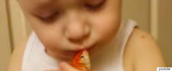 사랑하는 물고기를 위해 장례식을