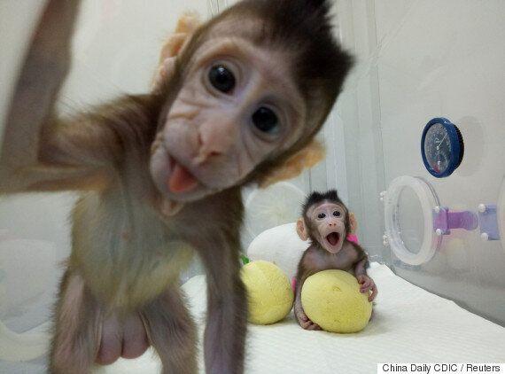 중국, 세계 최초 원숭이 복제 성공...