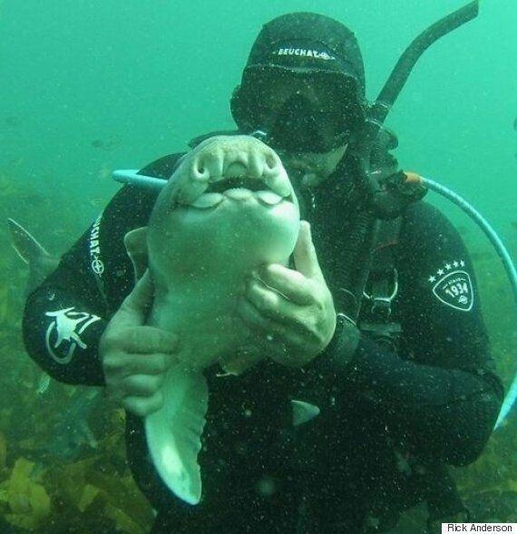 이 다이버는 상어 한 마리와 7년 동안 우정을