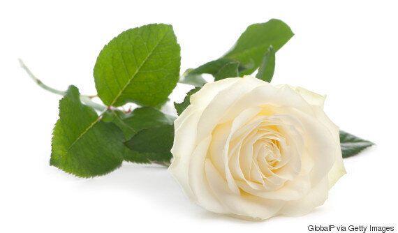 가수들이 흰 장미를 달고 그래미 어워드에