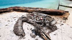 멸종위기종의 새가 죽은 채 발견된 허망한