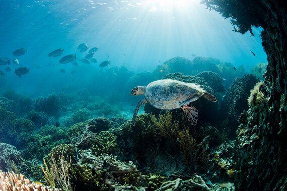 건강한 바다를 만들고 기후변화를 막는
