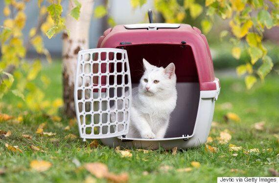 고양이 데리고 비행기 탄 날에 생긴