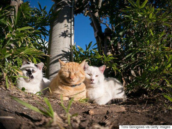 일본의 사육 고양이 수가 처음으로 개를