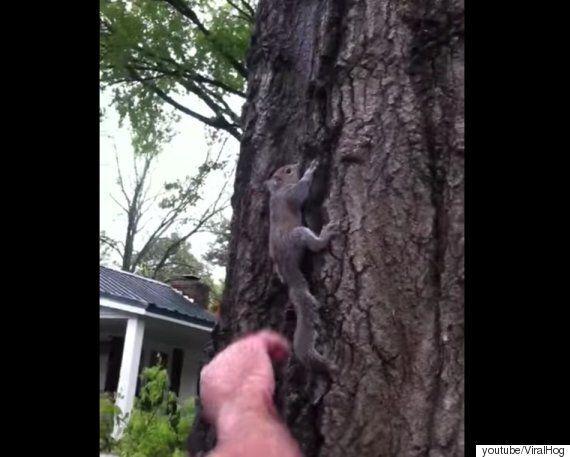 구조한 다람쥐를 자연으로 돌려보내려다 발생한