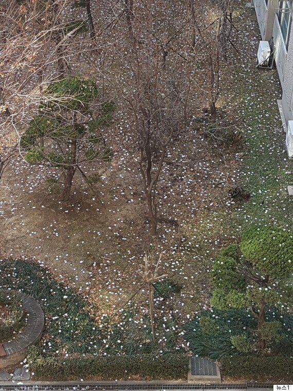 롯데월드타워에서 뿌린 종이 꽃가루는 쓰레기가