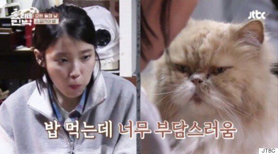 2017년을 빛낸 '최고의 고양이