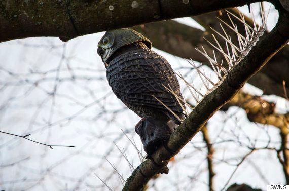 새가 앉지 못하게 나뭇가지에 쇠못을 박은 부촌