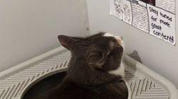 고양이가 화장실에서 볼 수 있는 신문을