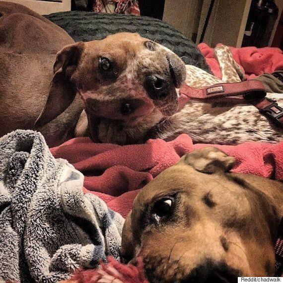 개 한 마리가 인터넷을 혼란에