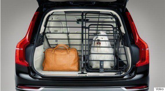 기아차가 자동차용 반려동물 용품 3종을 출시했다