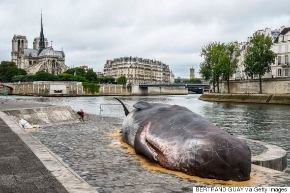 수백명이 인간띠를 만들어 고래들을