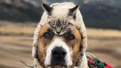 강아지와 고양이가 함께 여행을