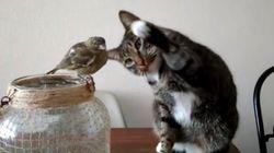 고양이는 새를 너무 쓰다듬고