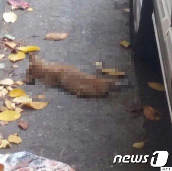 누군가 새끼고양이를 죽여 가시나무에 매달아
