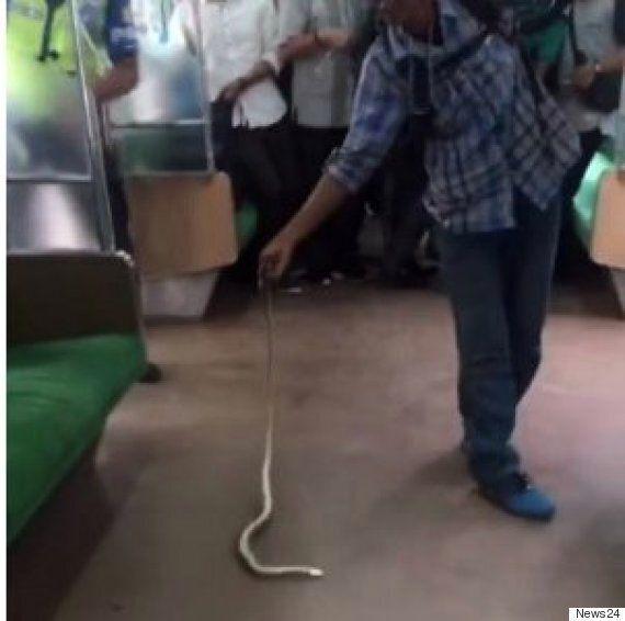 전철에 숨은 뱀을 맨손으로 잡아 죽인