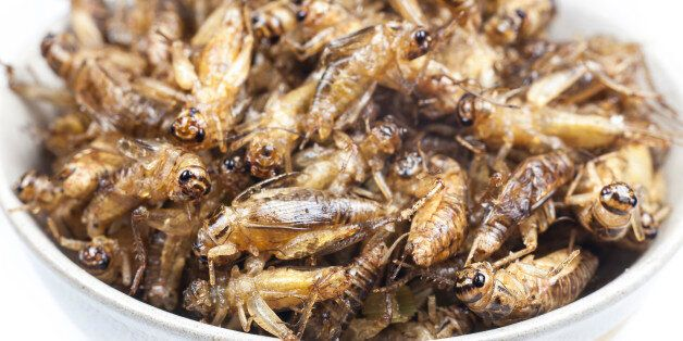 Fried crickets is the food in thai.Fried crickets is the food in