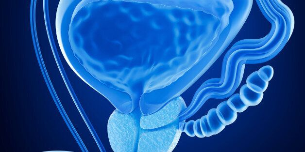 Prostate and male reproductive system , x-ray view 3D