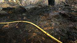 Chefchaouen: 470 hectares de forêt ravagés par les incendies en moins d'une