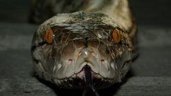 뱀과 거미 공포증은 인간 DNA에